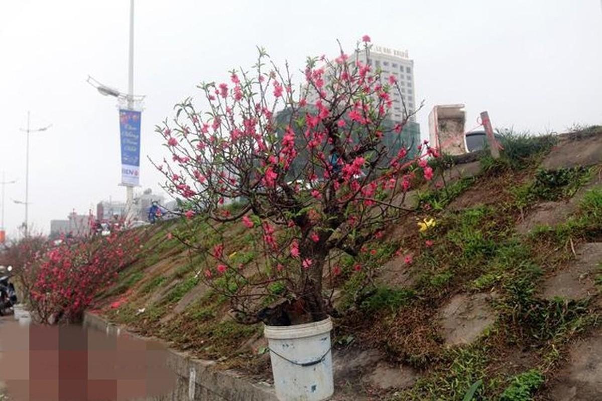 Thu choi hoa dat do cua nha giau Viet sau Tet Nguyen dan-Hinh-8