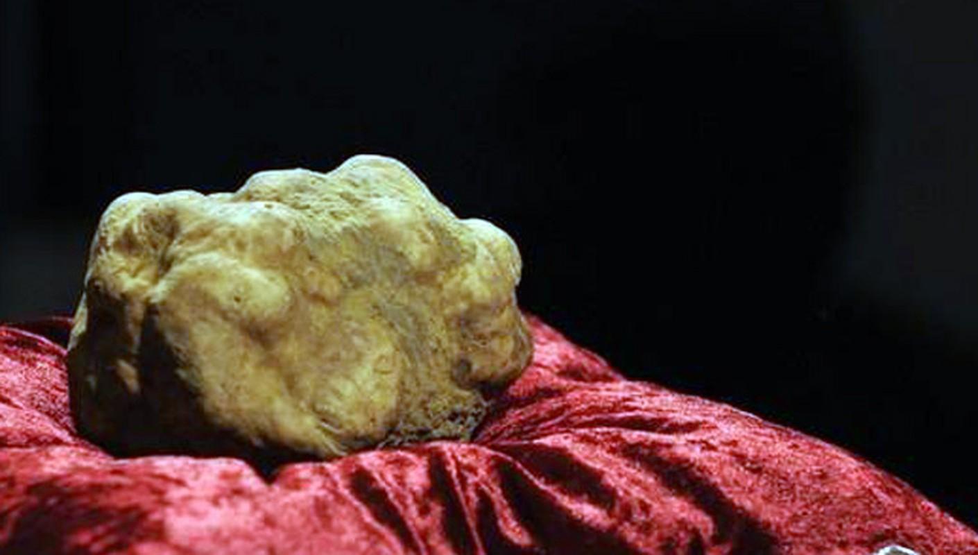 Gan ngong, nam truffle ong Trump