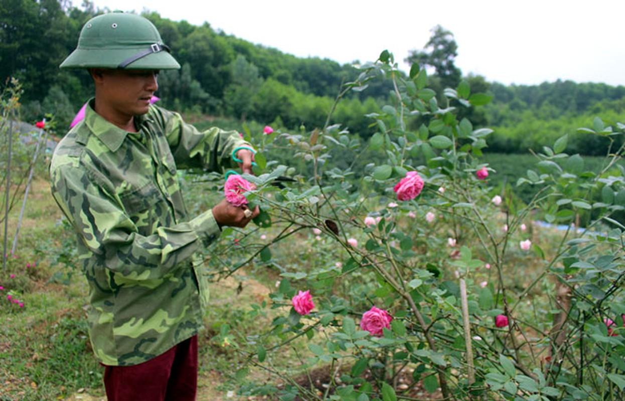 "Loat vuon hong co ""hai ra tien"" o Viet Nam-Hinh-8"