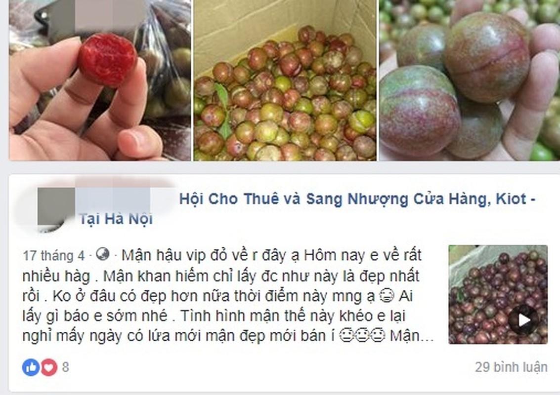"Man Moc Chau dau mua gia ""chat"" hut khach Ha thanh-Hinh-2"