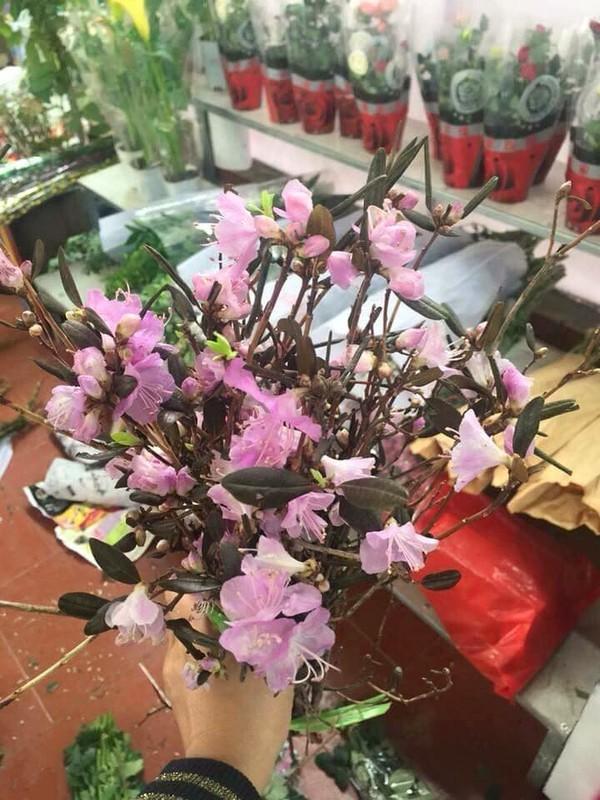 Hoa do quyen ngu dong tai xuat, ban tran lan tren mang-Hinh-10