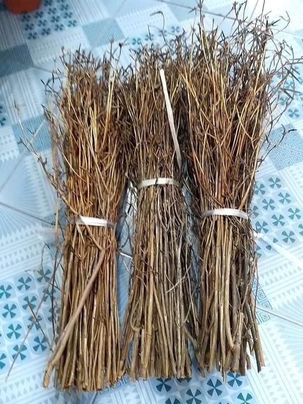 Hoa do quyen ngu dong tai xuat, ban tran lan tren mang-Hinh-6