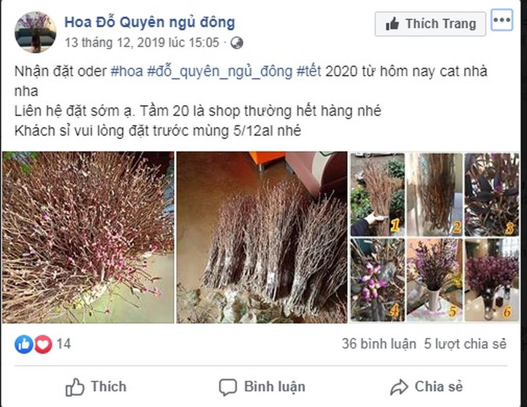 Hoa do quyen ngu dong tai xuat, ban tran lan tren mang