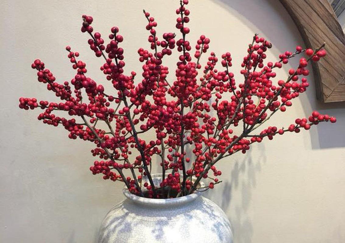 Nhung loai hoa nhap khau gay sot, chi em dua nhau mua choi Tet-Hinh-10