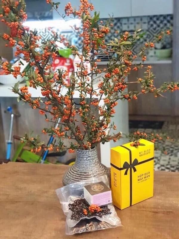Nhung loai hoa nhap khau gay sot, chi em dua nhau mua choi Tet-Hinh-6