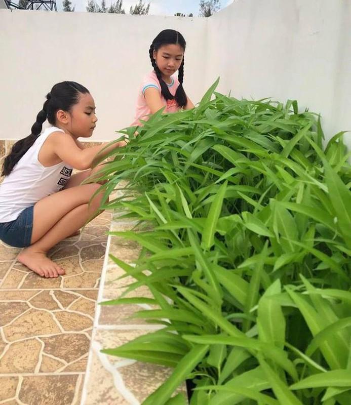 Khu vuon ngap tran hoa thom trai ngot trong biet thu cua Quyen Linh-Hinh-5