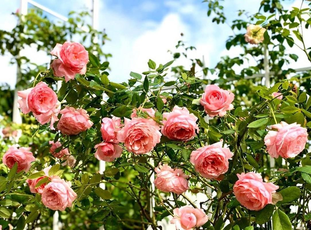 Khu vuon ngap tran hoa thom trai ngot trong biet thu cua Quyen Linh-Hinh-8