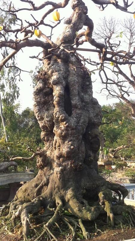 """Dai gia Viet """"doc tien ty"""" choi bonsai khe, coi nhu"""