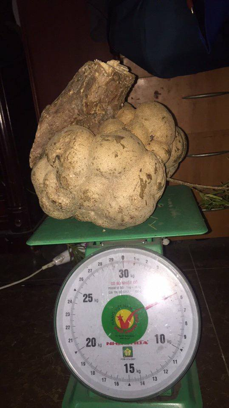 Loai nam dat do may chuc trieu/kg, nha giau Viet khong ngai chi tien mua-Hinh-8