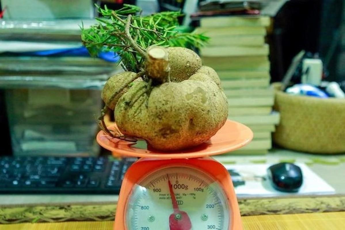 Loai nam dat do may chuc trieu/kg, nha giau Viet khong ngai chi tien mua-Hinh-9