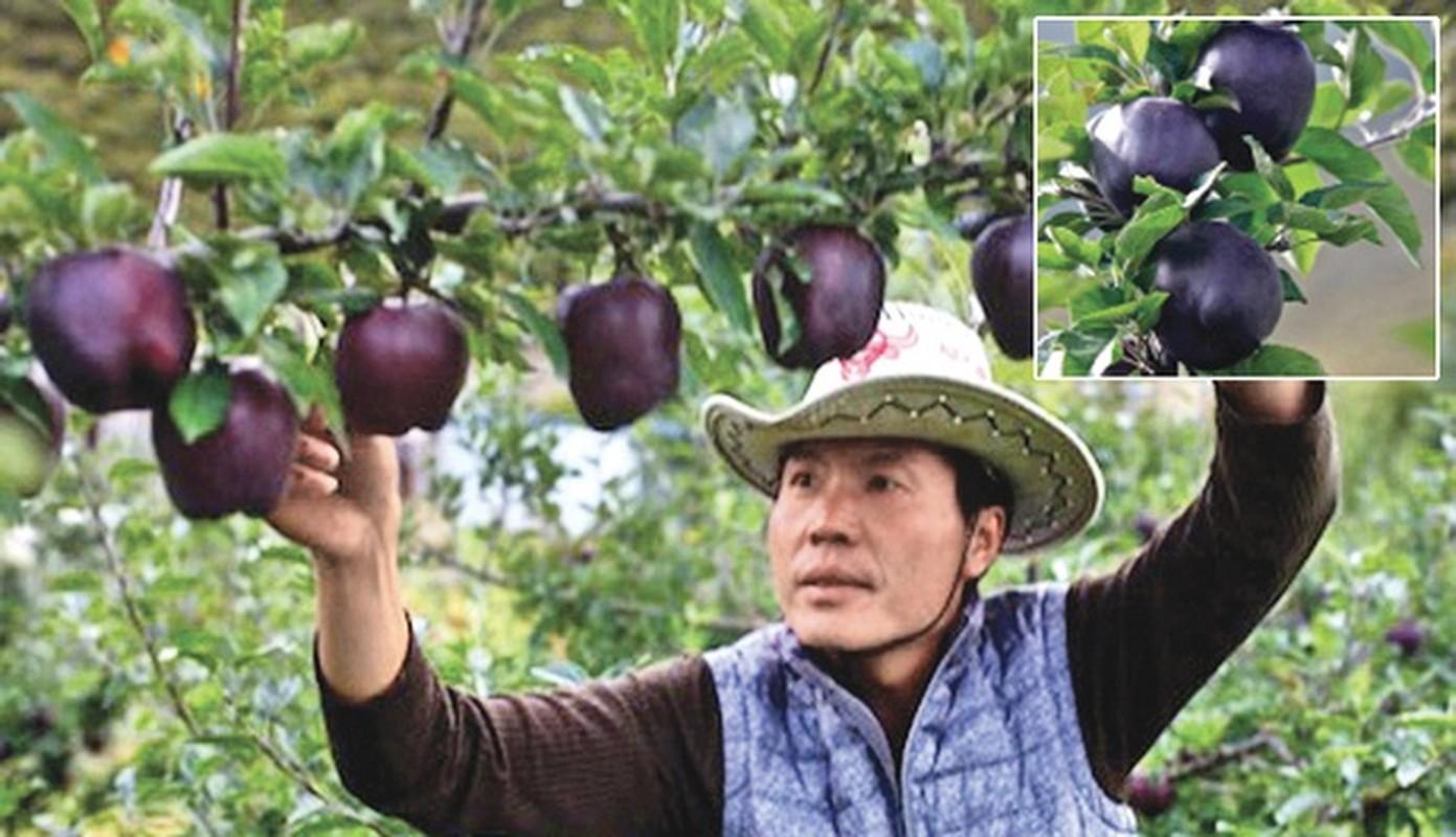 Tao kim cuong den nua trieu dong/qua dai gia khong ngai chi tien-Hinh-3