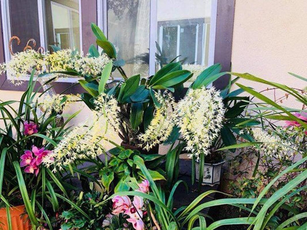 Man nhan vuon hoa qua sai luc liu trong biet thu o My cua Bang Kieu-Hinh-10