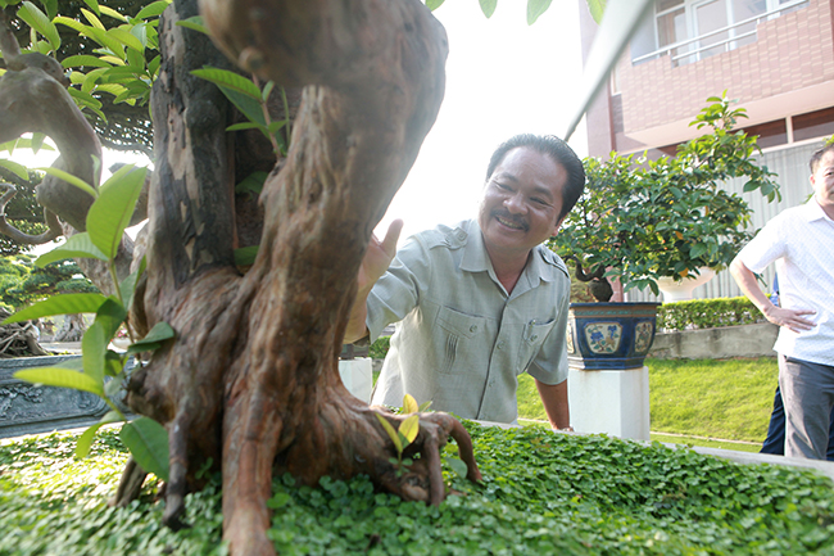 "Bonsai oi ""Te tuong Luu gu"" chu nhan quy hon vang-Hinh-9"