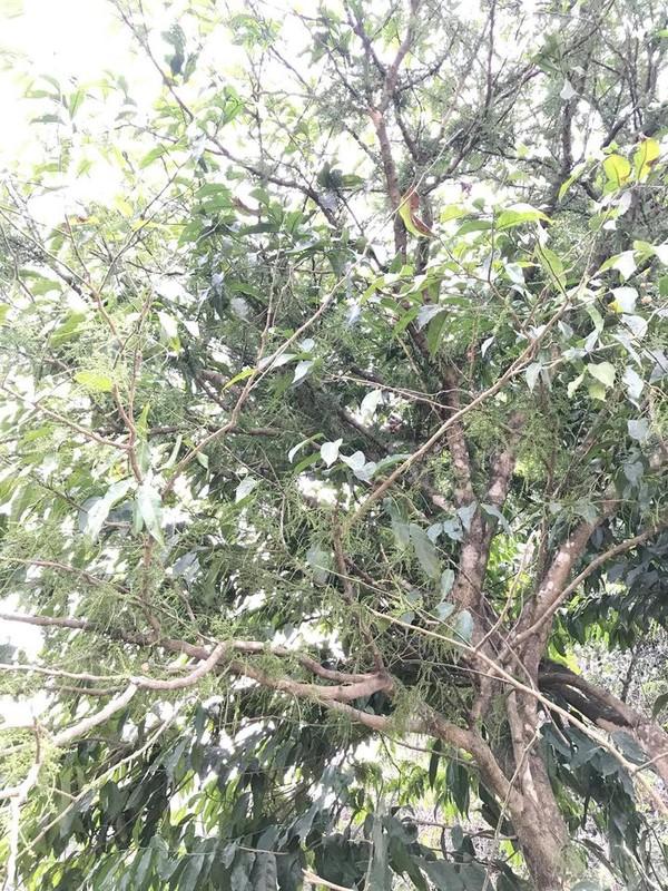 Hoa rau ngot rung dat hon bo My khach van phai xep hang cho mua-Hinh-3