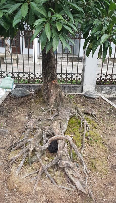 Loat bonsai dang quai, gia ca ty dong khien dai gia me met-Hinh-10