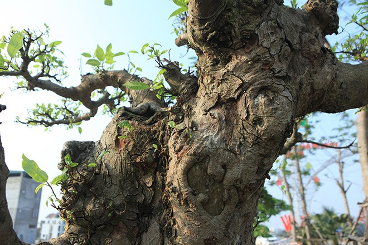 Loat bonsai dang quai, gia ca ty dong khien dai gia me met-Hinh-4