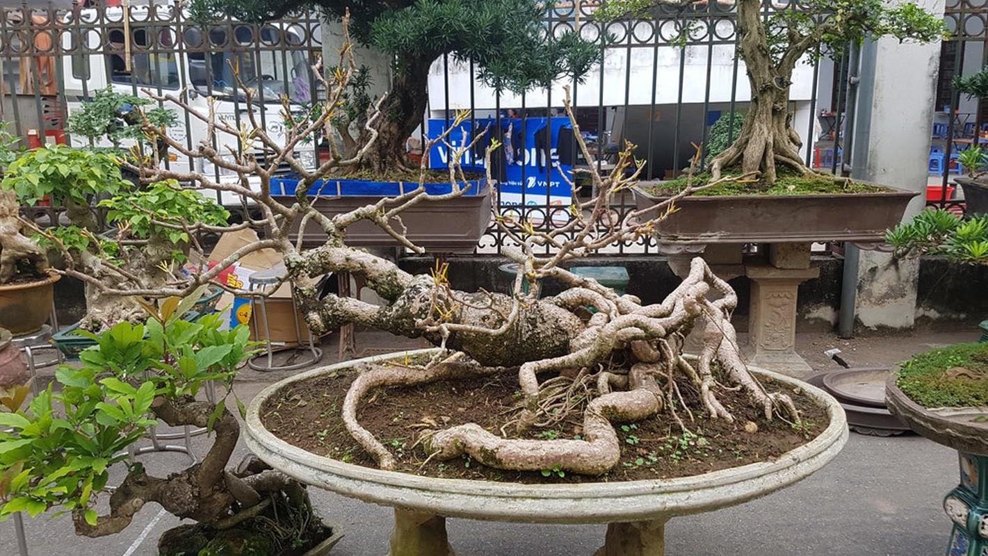 Loat bonsai dang quai, gia ca ty dong khien dai gia me met-Hinh-6
