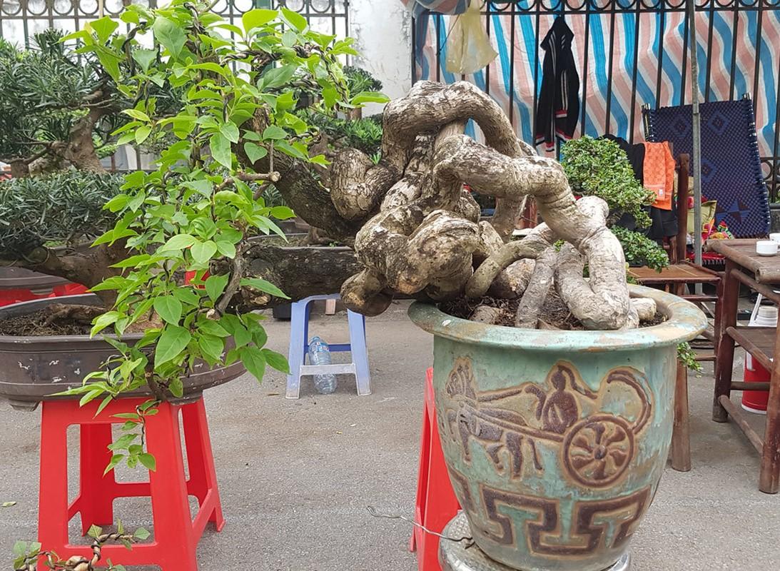 Loat bonsai dang quai, gia ca ty dong khien dai gia me met-Hinh-8