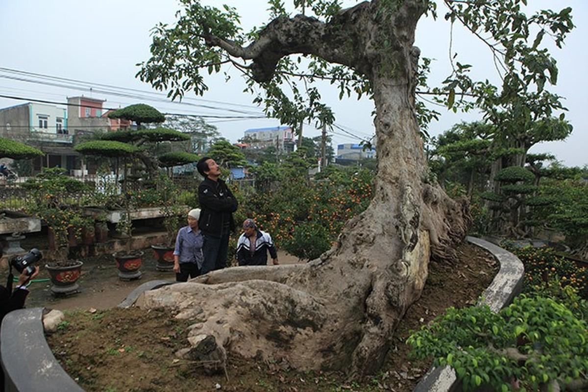 Loat bonsai dang quai, gia ca ty dong khien dai gia me met-Hinh-9