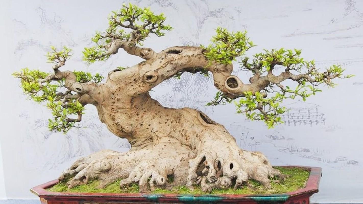 Loat bonsai dang quai, gia ca ty dong khien dai gia me met