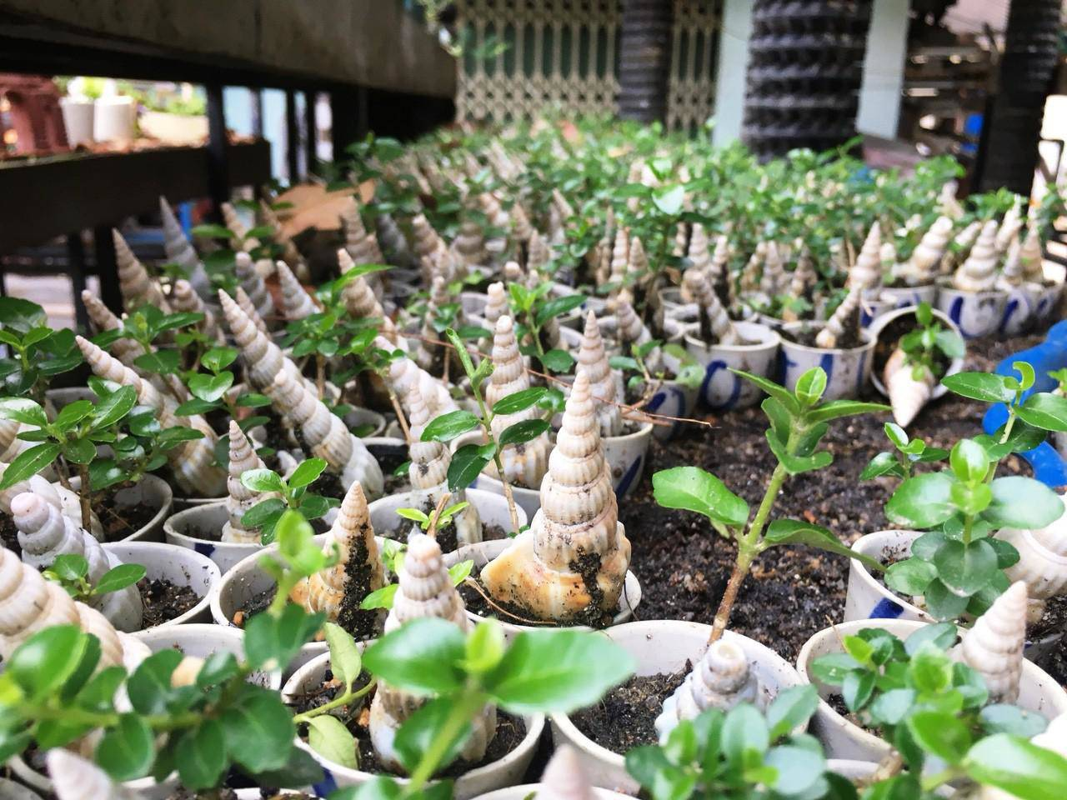 Man nhan bo suu tap bonsai mini ky luc the gioi cua lao nong Khanh Hoa-Hinh-3