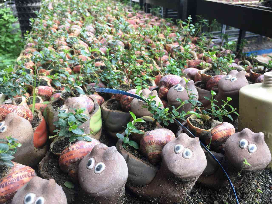 Man nhan bo suu tap bonsai mini ky luc the gioi cua lao nong Khanh Hoa-Hinh-4