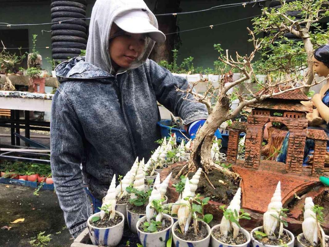 Man nhan bo suu tap bonsai mini ky luc the gioi cua lao nong Khanh Hoa-Hinh-6