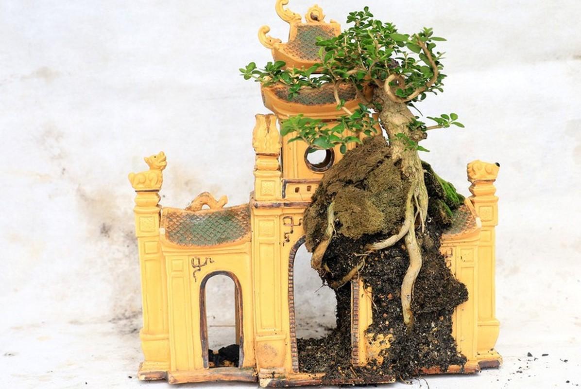 Man nhan bo suu tap bonsai mini ky luc the gioi cua lao nong Khanh Hoa-Hinh-7