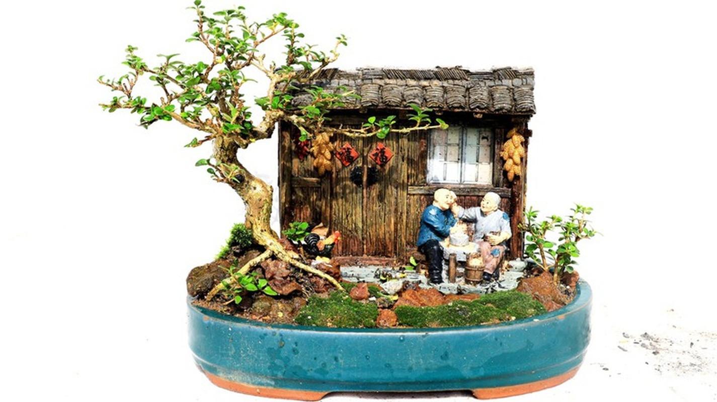 Man nhan bo suu tap bonsai mini ky luc the gioi cua lao nong Khanh Hoa-Hinh-9