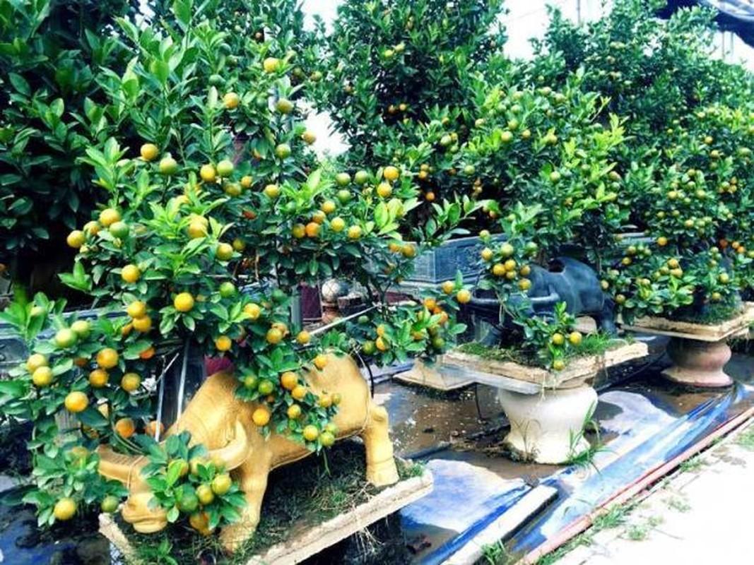 Man nhan loat bonsai hinh trau choi Tet 2021-Hinh-3