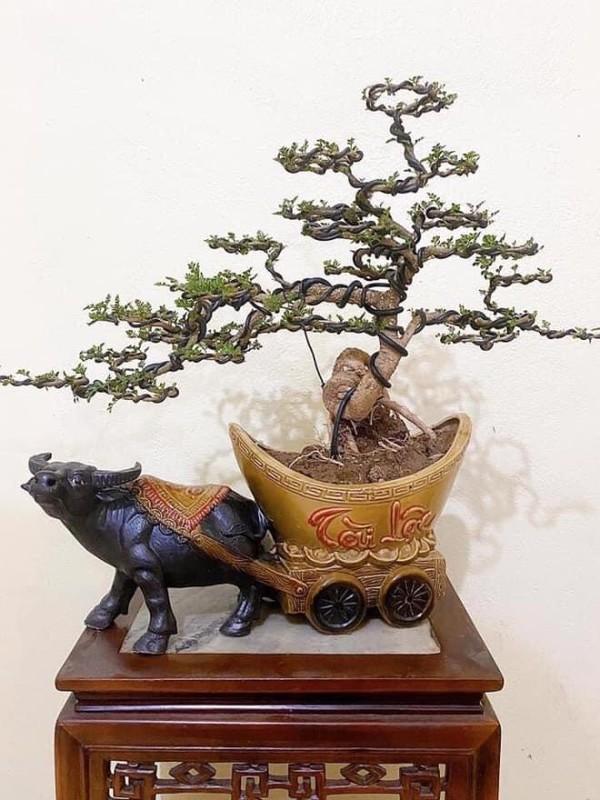 Man nhan loat bonsai hinh trau choi Tet 2021-Hinh-7