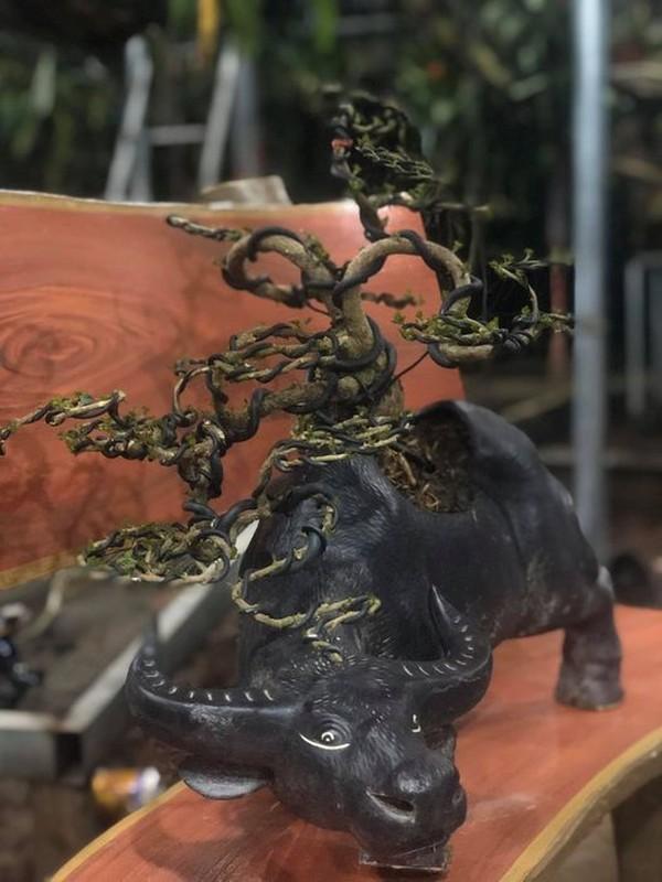 Man nhan loat bonsai hinh trau choi Tet 2021-Hinh-8