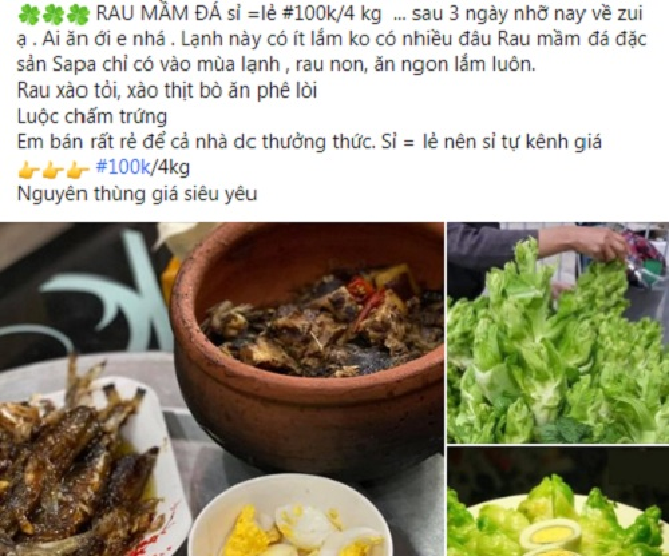 Su that ve loai rau mam da Sa Pa chi 20.000 dong/kg-Hinh-4