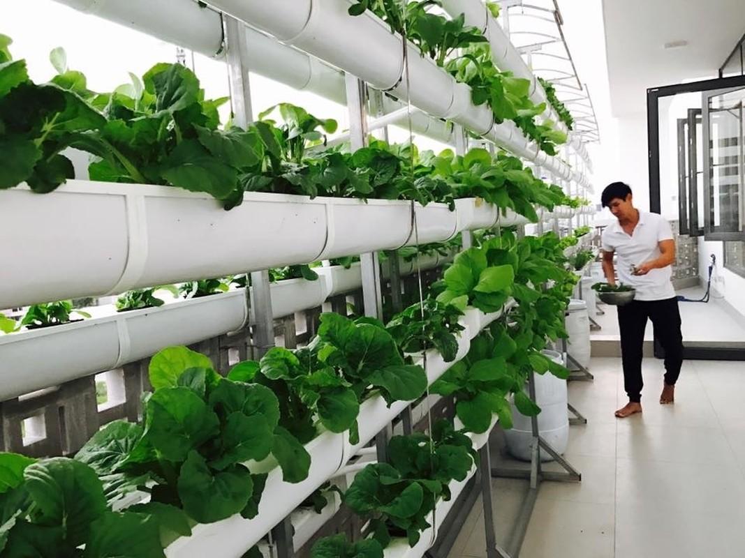 Ngam vuon rau xanh tot trong nha sao Viet-Hinh-2