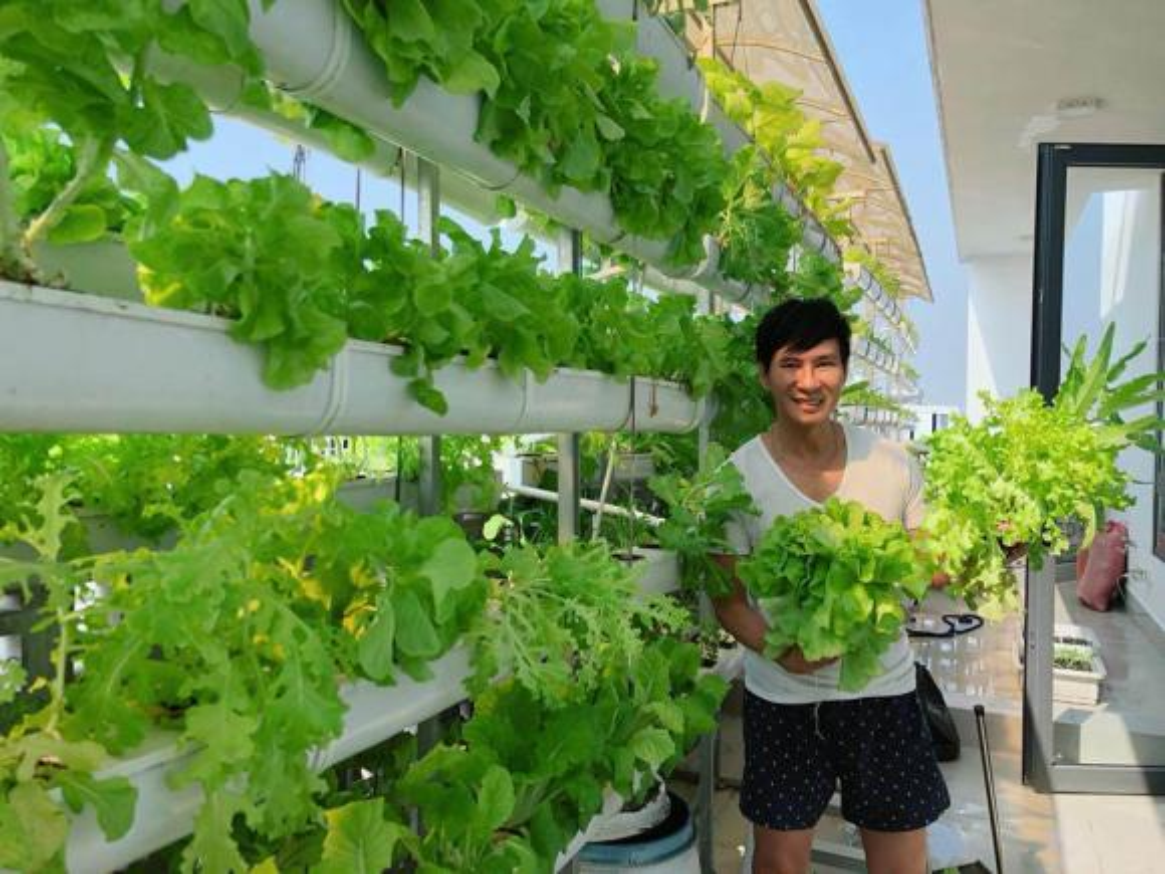 Ngam vuon rau xanh tot trong nha sao Viet-Hinh-4