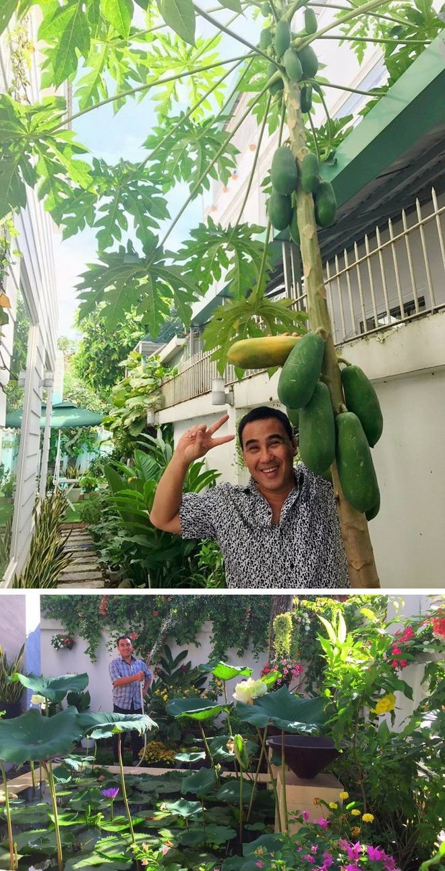 Ngam vuon rau xanh tot trong nha sao Viet-Hinh-7