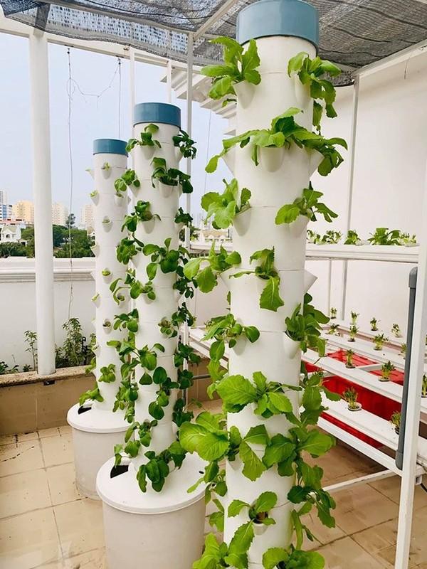 Ngam vuon rau xanh tot trong nha sao Viet-Hinh-9