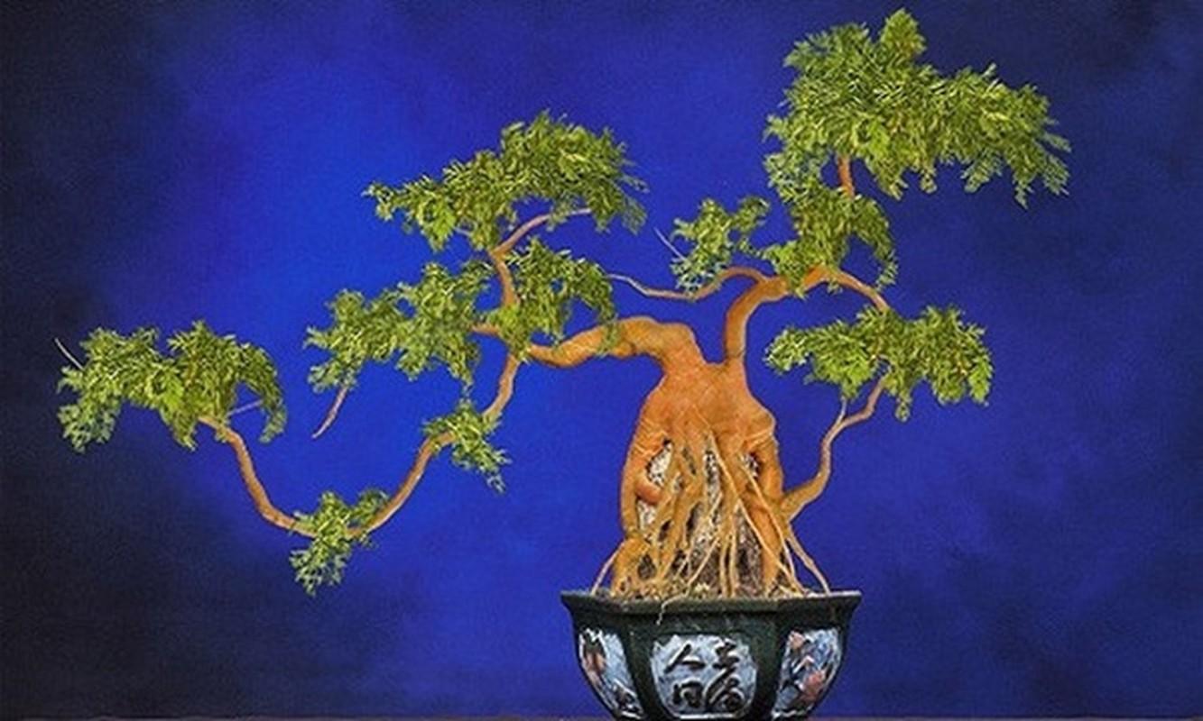 Cu cai do, su hao, ca rot len doi thanh bonsai choi Tet-Hinh-5