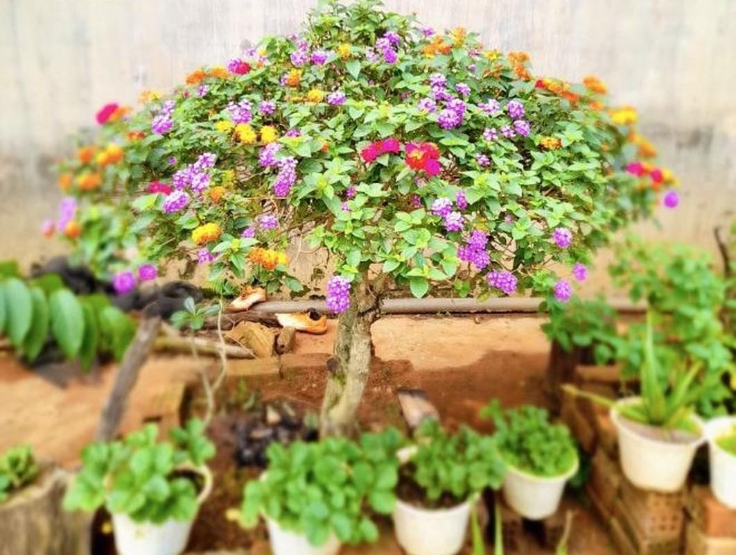 Ngo ngang loat cay dai thanh bonsai choi Tet-Hinh-4