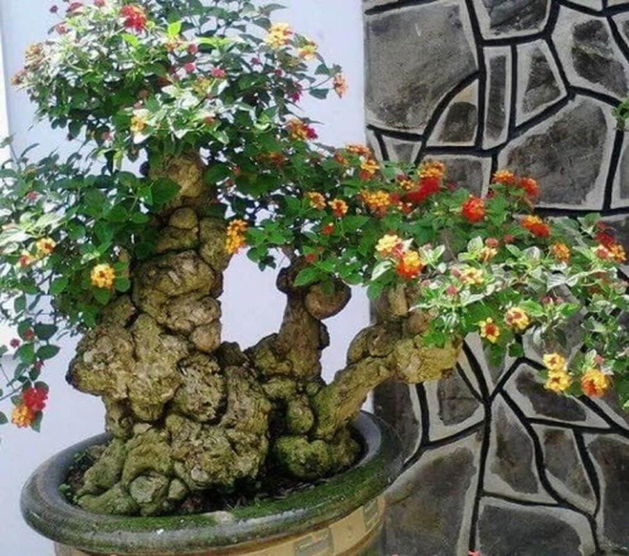 Ngo ngang loat cay dai thanh bonsai choi Tet-Hinh-6