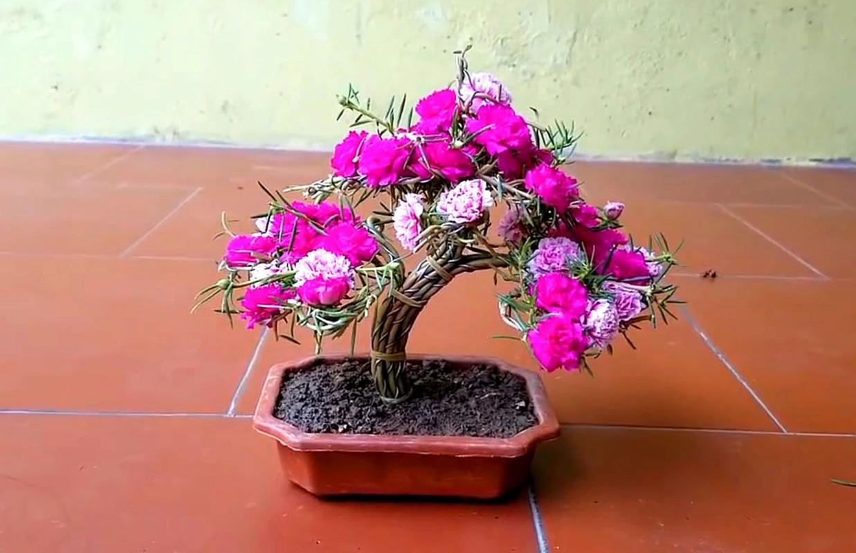 Ngo ngang loat cay dai thanh bonsai choi Tet-Hinh-7