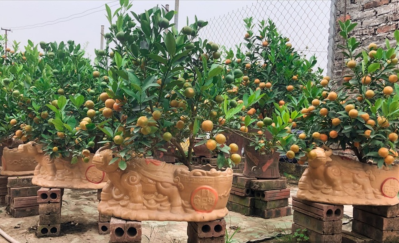 Loat san pham hinh trau hut khach dip Tet Tan Suu 2021-Hinh-5