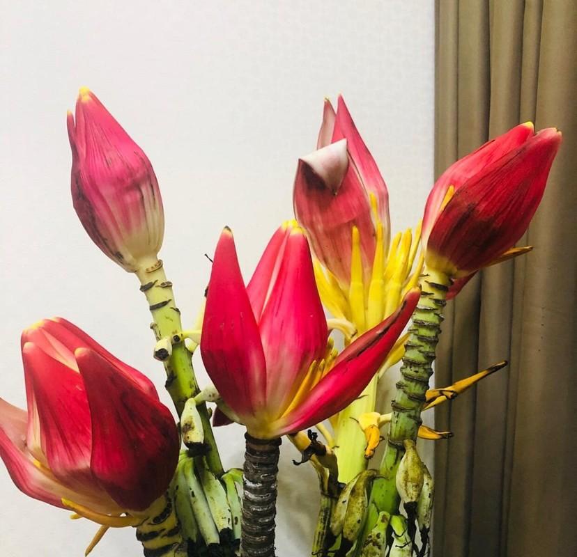 4 loai hoa rung duoc dan Ha thanh lung choi Tet-Hinh-4