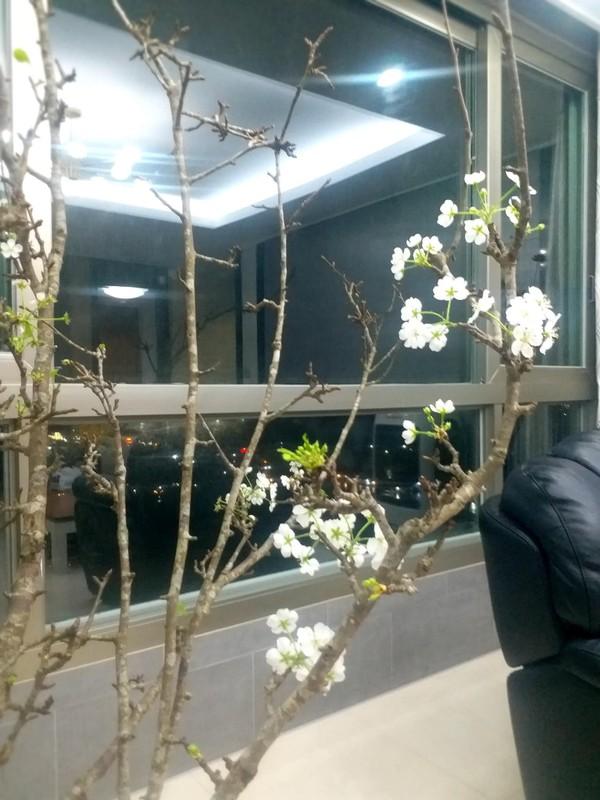4 loai hoa rung duoc dan Ha thanh lung choi Tet-Hinh-7