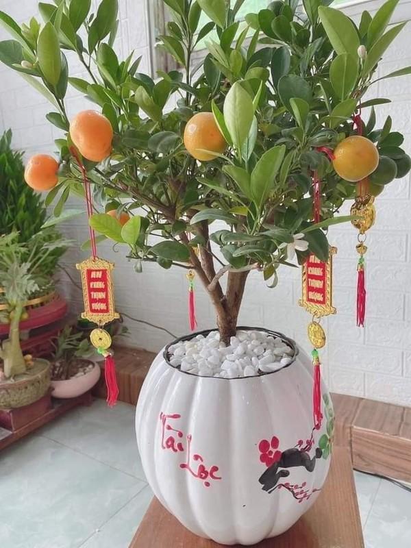 Bonsai ti hon quat, sung, dao...gia mem, hut khach dip Tet-Hinh-2