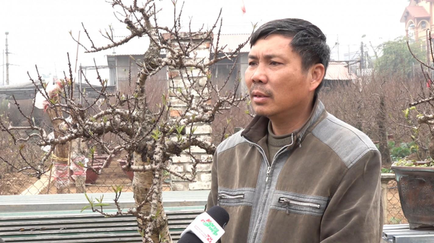 Nhung cay dao ky cong cham soc may chuc nam... chi cho thue khong ban-Hinh-9