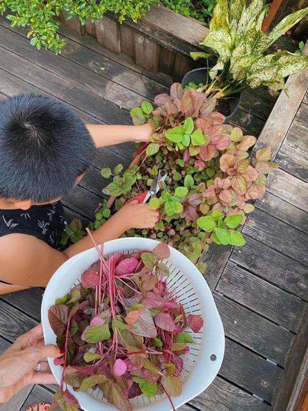 Muot mat vuon rau xanh tot um trong biet thu cua Ha Tang-Hinh-2