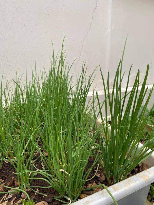Muot mat vuon rau xanh tot um trong biet thu cua Ha Tang-Hinh-6