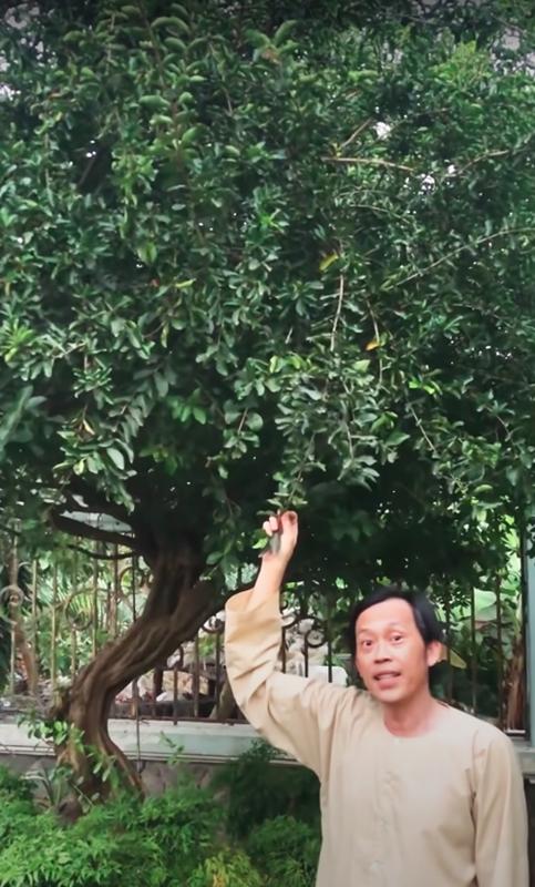 Muot mat vuon cay sai triu qua trong nha tho To cua Hoai Linh-Hinh-9
