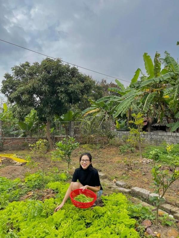 Vuon rau qua tot um trong nha Hoa hau Do Thi Ha-Hinh-2